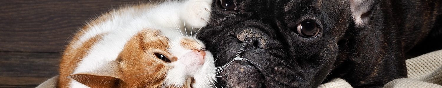 Cat nibbling Dog's face